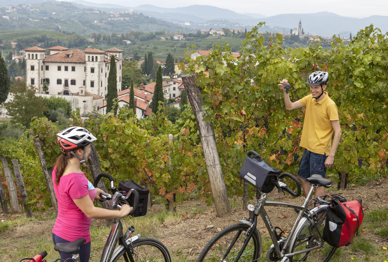 Cycling among wineyards in Slovenia