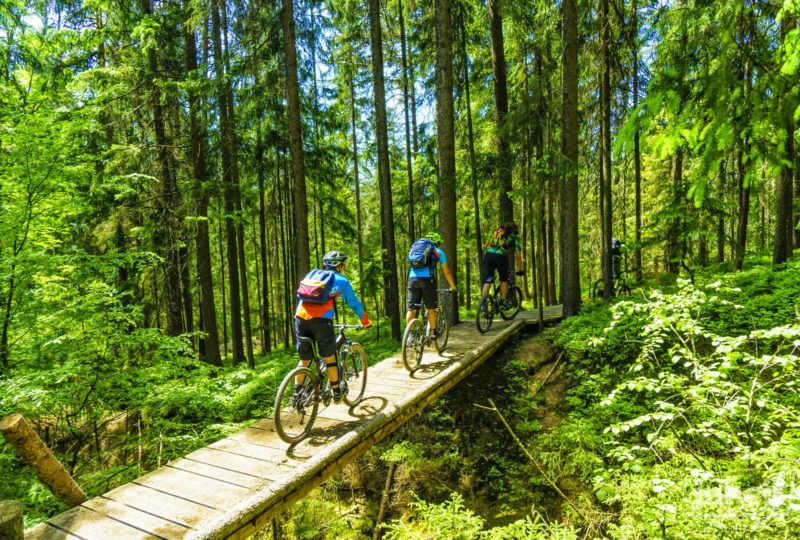 bikers in forest trans slovenia tour