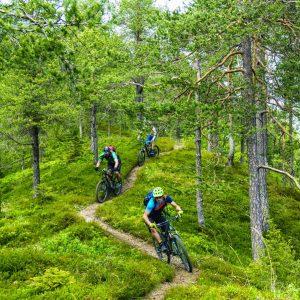 bike in forest trans slovenia