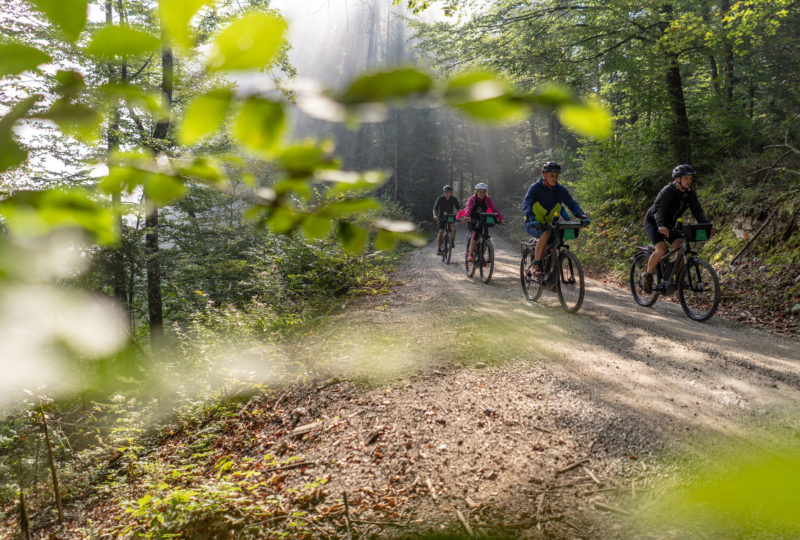 People on bike in forest in kočevje
