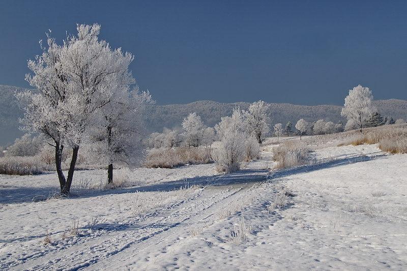 Winter with snow in Kočevje