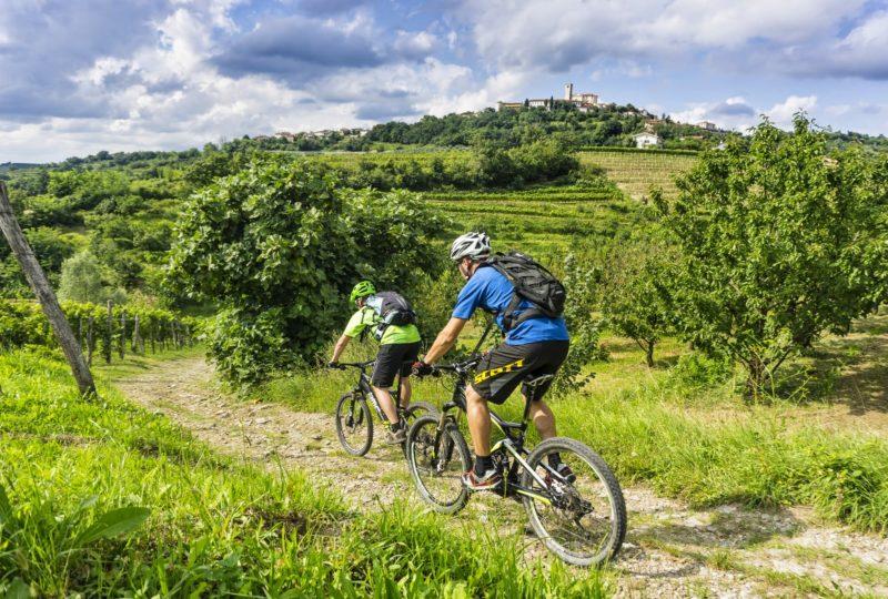 Two men cycling in goriška brda through vineyards