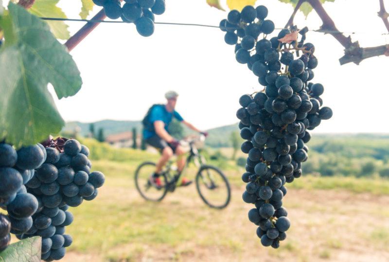 vineyards and biker
