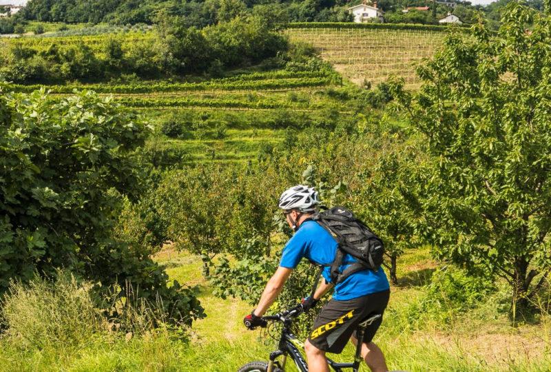 mountain biker in goriska brda