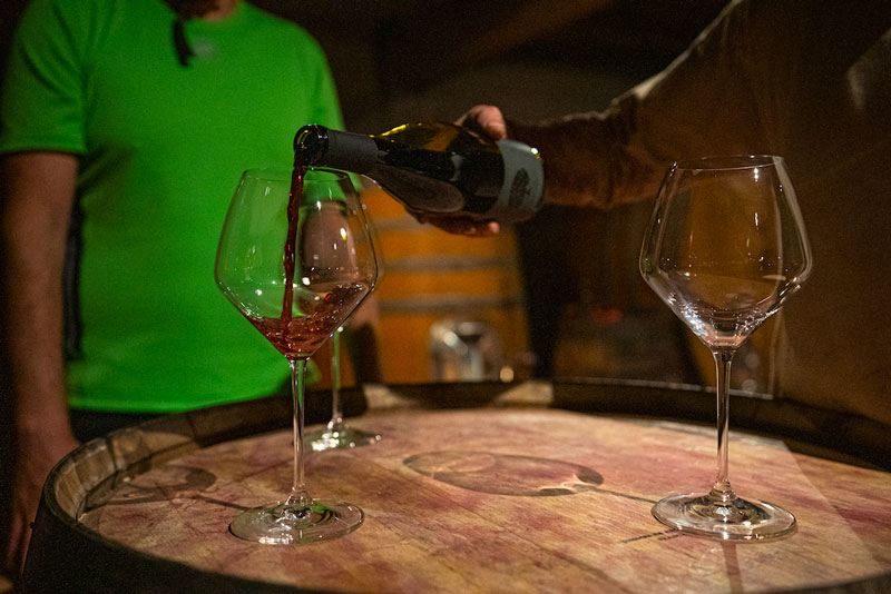 Bike Slovenia Green wine tasting Goriska Brda