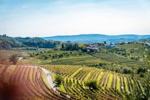 Slovenia top sights cycling goriska brda landscape