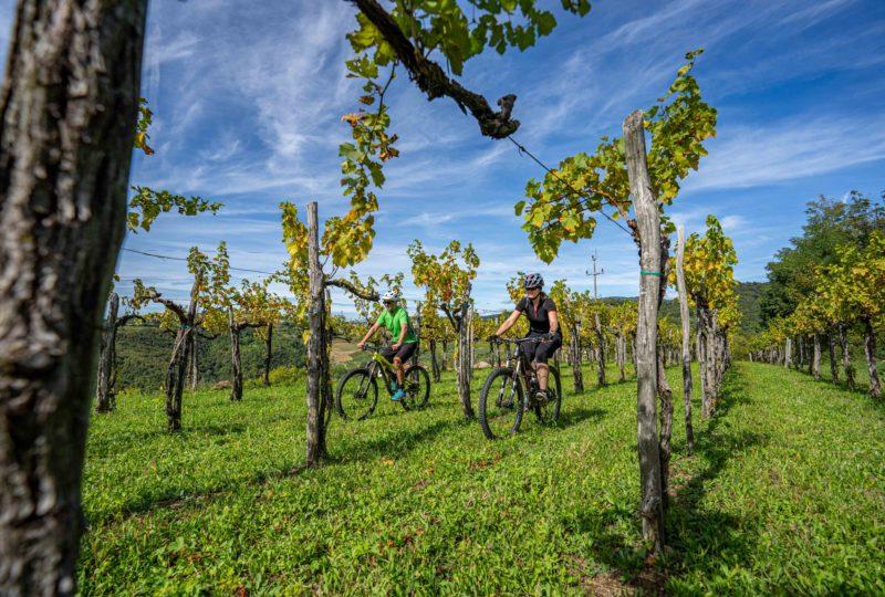 Goriska brda day bike trip
