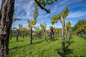 cycling-vineyards