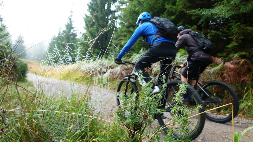 cycling-kocevje-forests-slovenia-cycling