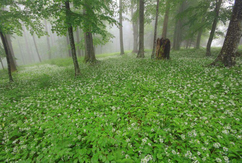 virgin-forests-kočevje-slovenia
